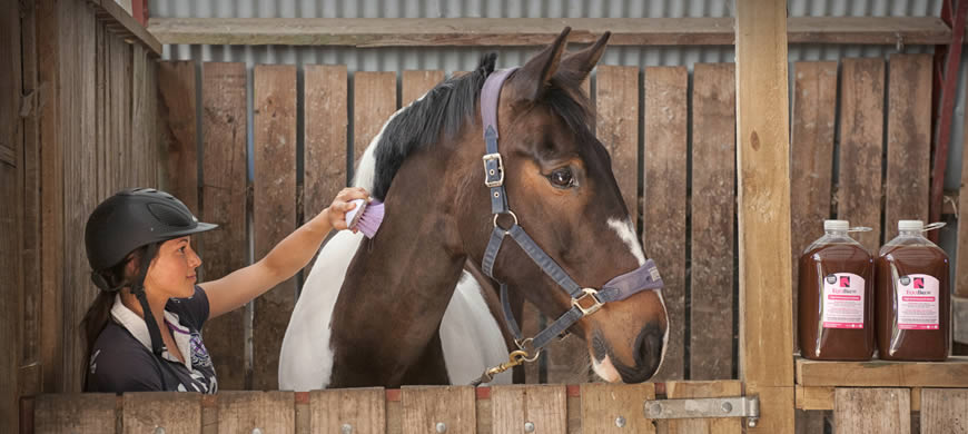 EquiBrew Probiotics for Horses